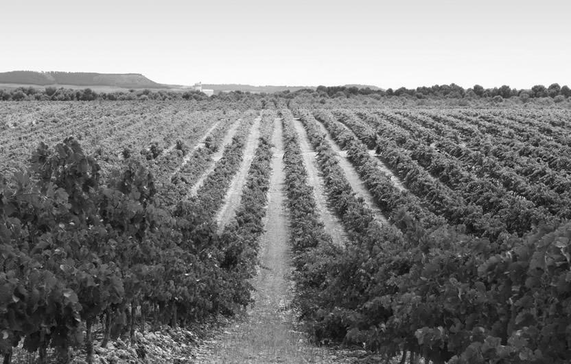 Imagen principal Winery Arts