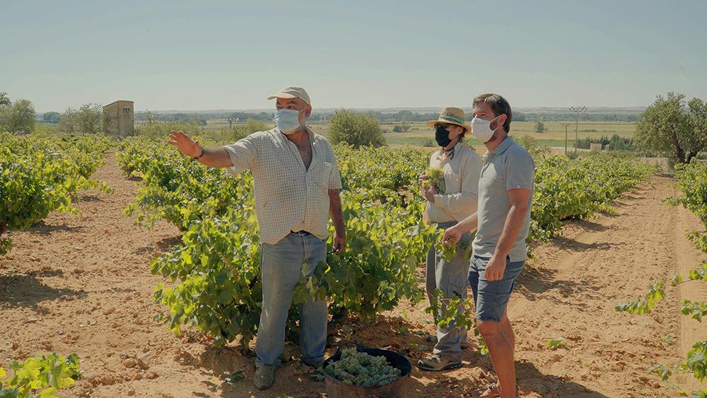 ¿Cómo será la vendimia 2020 en los viñedos de Vintae?